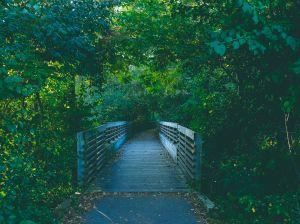 Parken Ann Arbor