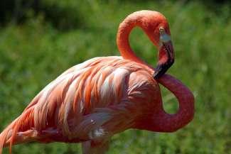 Overvloedige biodiversiteit in de dierentuin van Madison, Wisconsin.